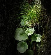 Rock Plant.jpg