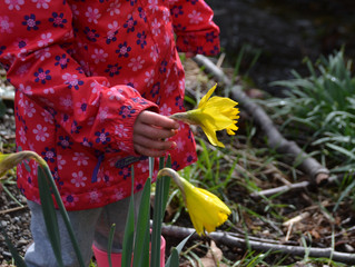 Wondering about the benefits of Forest School?
