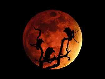 The Magick of the Super Blood Blue Moon!