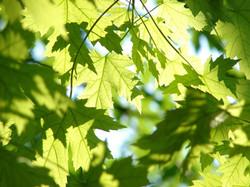 leaves-291024_1920