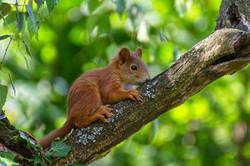 squirrel-4310069_1920
