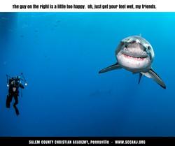 too happy shark