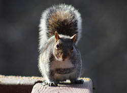 Sweet, innocent squirrel