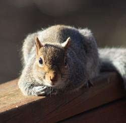 Chillaxin squirrel
