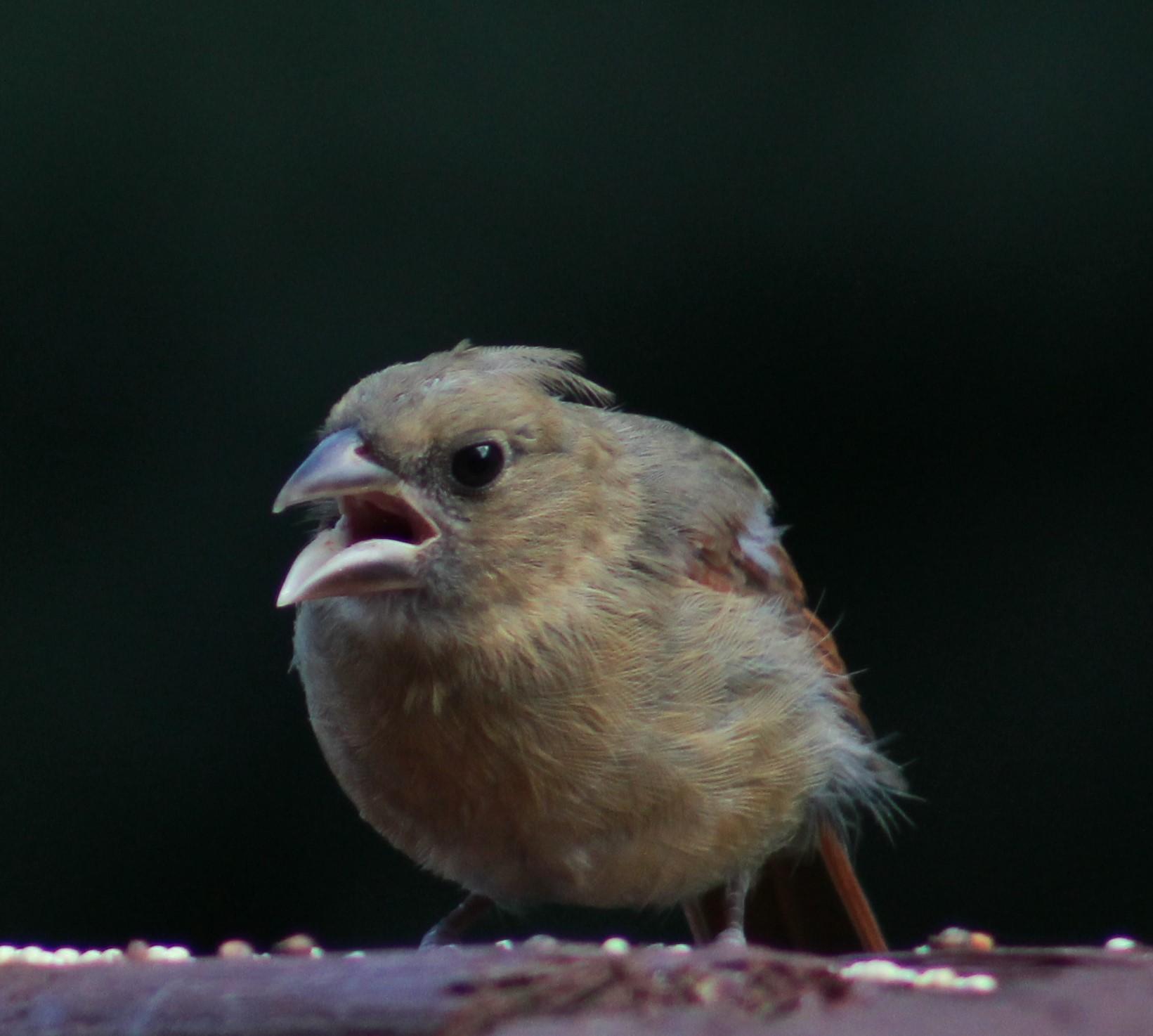 Bratty teenage cardinal