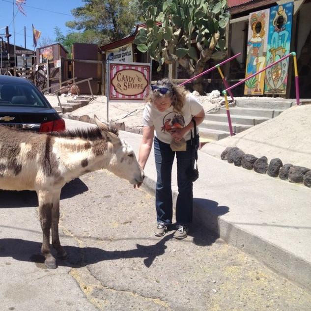 Oatman AZ burro.jpg