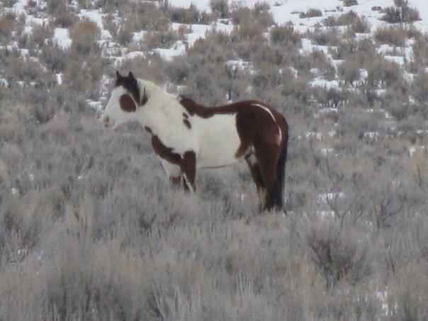 Sand Wash colt on the Range