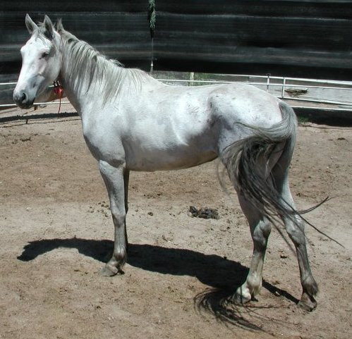 Sand Wash Basin Internet Adoption Horse