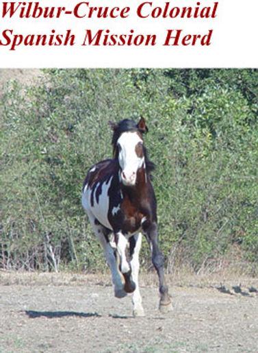 Wilbur-Cruce Mission Horse Diamonte.jpg