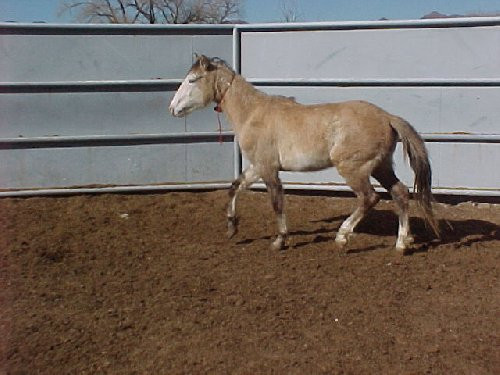 Sandwash Basin HMA Horse