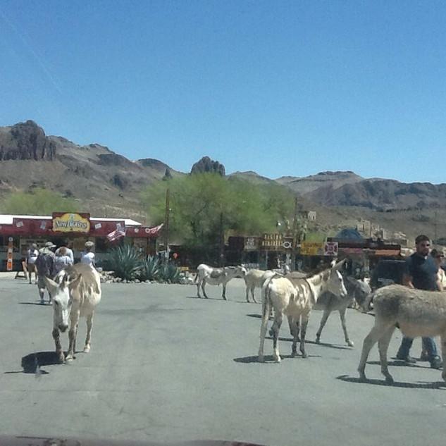 Oatman AZ burros.jpg