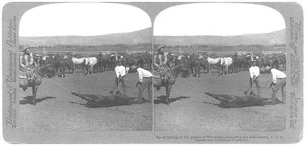 Wyoming-branding wild horses.jpg
