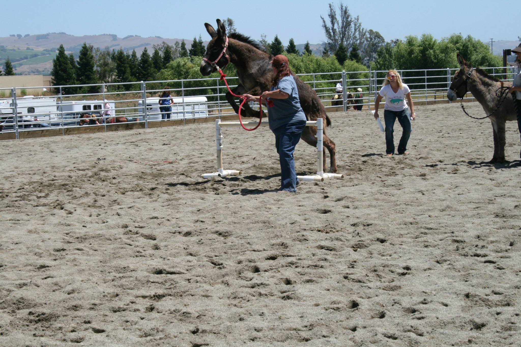 Burro Jumping