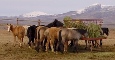 Palomino Valley Wild Horse & Corrals