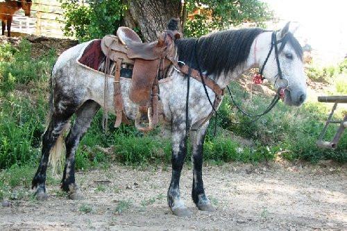 Piceance-East Douglas horse.jpg