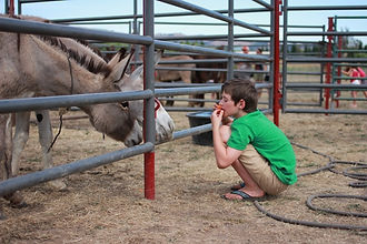 donkey boy-websized.JPG