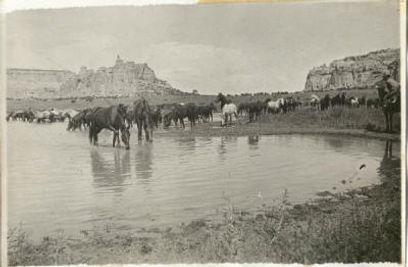 Swasey horses Reid Nielsen Pond Sinbad_s
