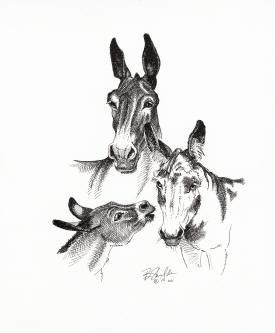 Donkey Tri-Fecta   $500