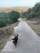 Topanga Trail.JPG