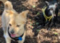 small dog park.jpg