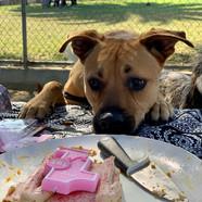 more cake please.jpg