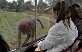 Knuthenborg Safaripark d. 3.7.2020