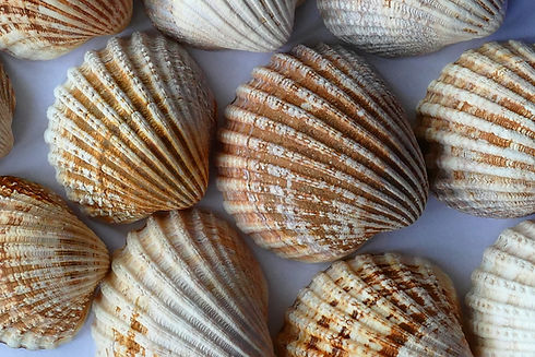 sea-shells-close-up.jpg