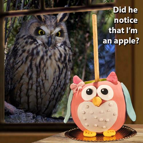 Caramel Owl