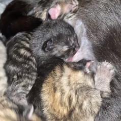Little Bundles of Fur