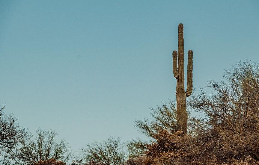 1.14 Acres in Willcox, AZ!