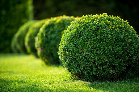 shrubs louisville ky.jpg