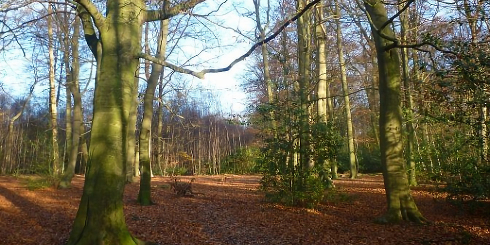 Try It! Hike 4: Beaconsfield Circular