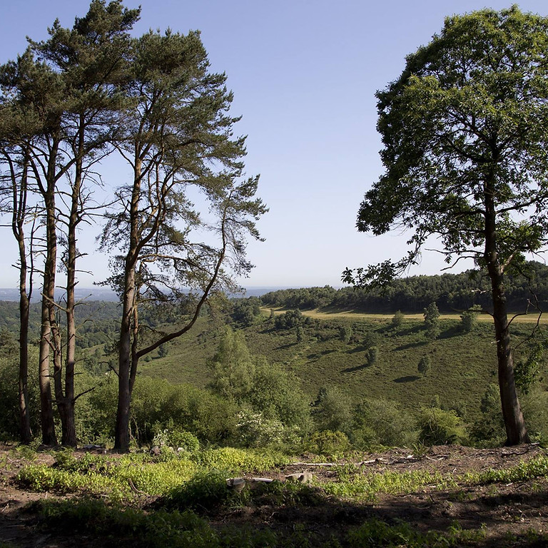 Hike: Haslemere and the Devil's Punchbowl
