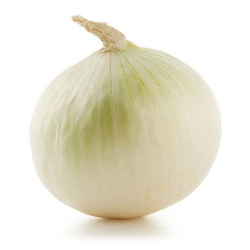 Large White Onion
