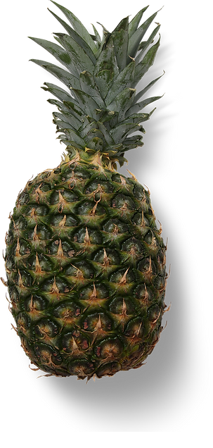 pineapple-pfsp.png