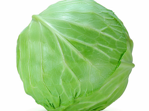 Large Primo Cabbage