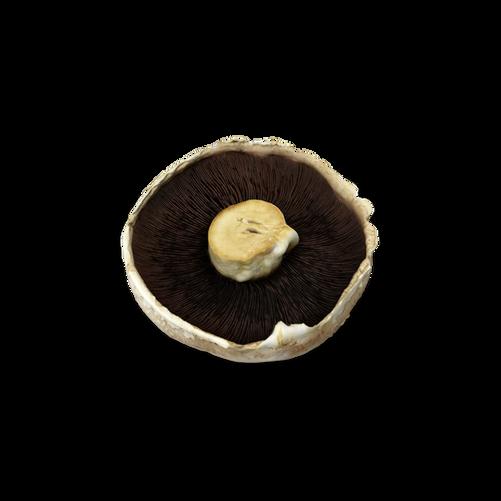 Mushroom.D16.2k.png