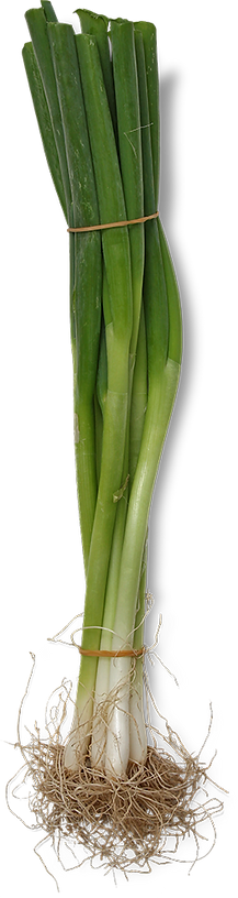 spring-onion-clear.png