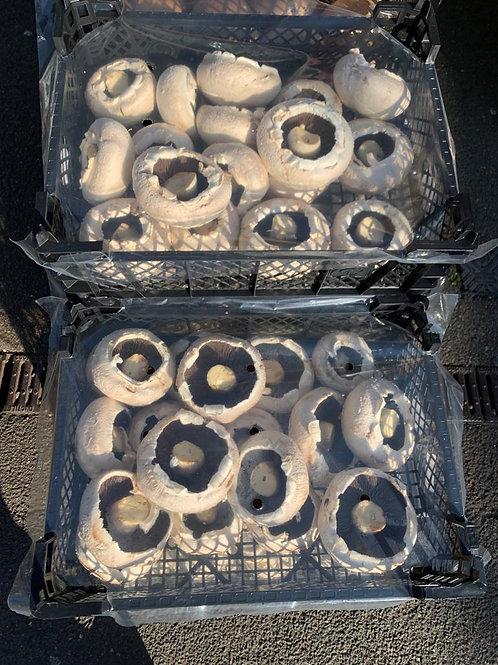 Flat White Mushrooms (tray)