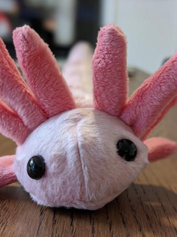 Axo the Axolotl