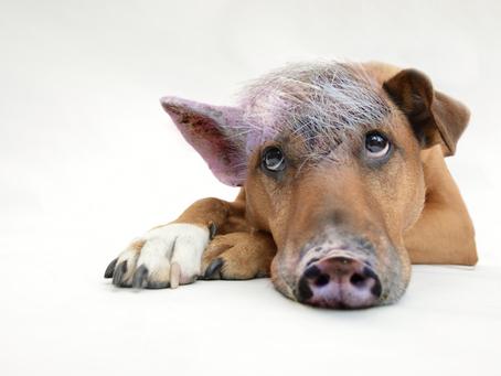 Wie Sie den inneren Schweinehund besiegen: Die Anleitung mit 7 Schritten!