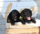 Puppies 2018 ANimal Health Page.png