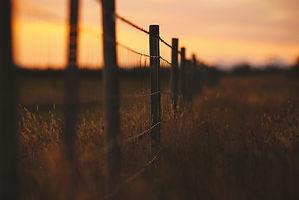 fence row.jpg