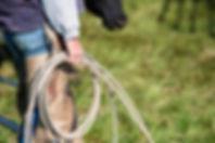Cowboy with rope.jpg