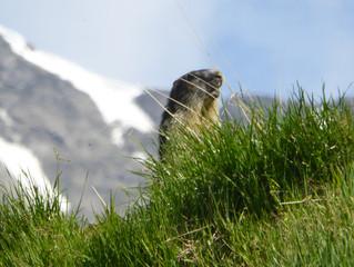 Vorbereitung auf meine Alpenüberquerung  / Preparing for a tour across the Alps