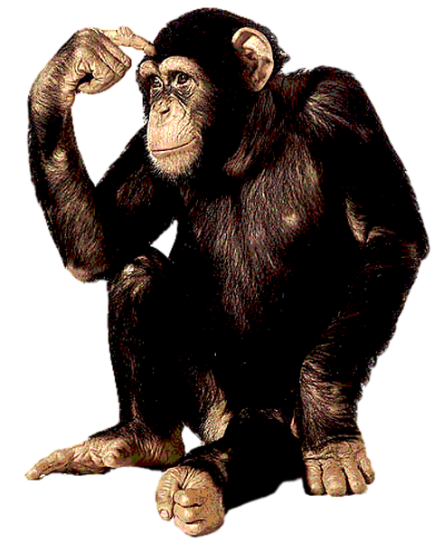 Chimp1.png
