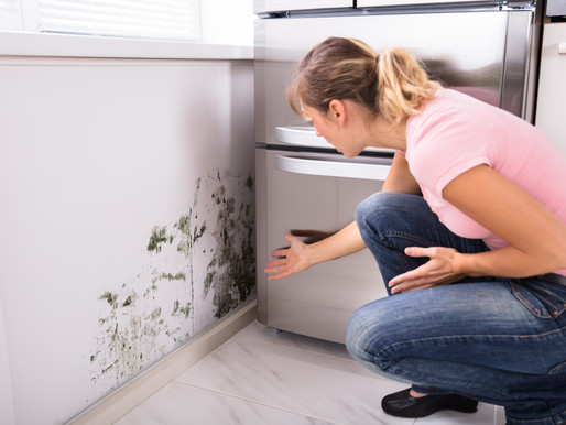 Does Mold Grow in the Cold?