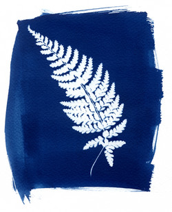 L'herbier bleu