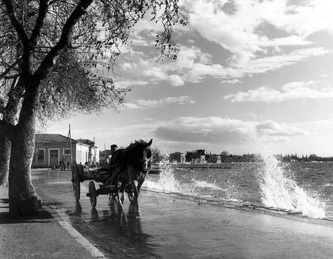 Αγριά 1955, φωτ.Τάκη Τλούπα