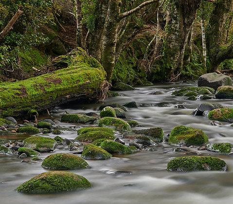 Framed Catlins River Section